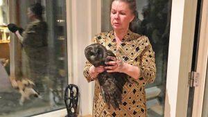 Hormista pudonnut pöllö naisen kädessä.