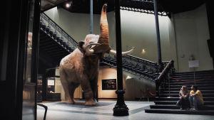 Täytetty elefantti jonkinlaisessa isossa, hallimaisessa museotilassa.