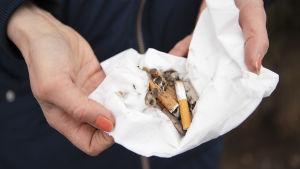 Tupakannatsoja kädessä valkoisen nenäliinan päällä.