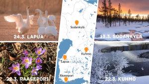 Kevätseuranta 2019 alkaa #ylekevätseuranta