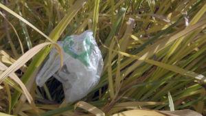 muovikassi kaislikossa