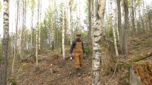 Henri Lokki går en skog av björk.