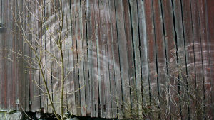 Ohuet puut ovat tuulessa taipuillessaan hanganneet siilon seinään puolikaarenmuotoiset vaaleat aurat.