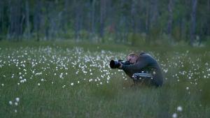 Luontokuvaaja Ville Heikkinen ottaa valokuvaa suovillan keskellä ohjelmassa 24 tuntia Euroopassa