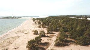 En vy från luften över en strand med tallar och hav.