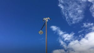 En mås sitter på en lyktstolpe mot blå himmel.