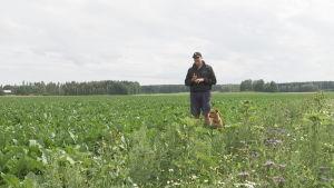 Sebastian Sohlberg står tillsammans med hunden Polly på åker med sockerbetor.