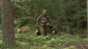 jägare jagar mårdhund med hjälp av hundar.