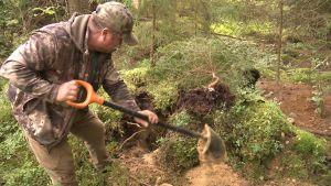 jägare gräver fram mårdhund från ett gryt.