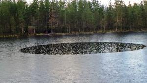 Erikoinen ympyrä järven pinnassa.