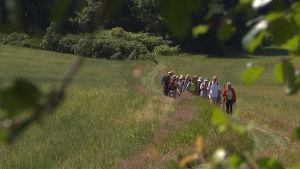 Människor vandrar i böljande grönt sommarlandskap.