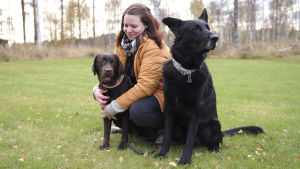 Koirahieroja Ulla Kälkäjä viettää aikaa labbis Maisun ja sakemanni Jaskan kanssa.