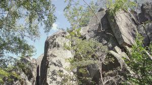 Puiden välistä nousevia kalliolohkareita.