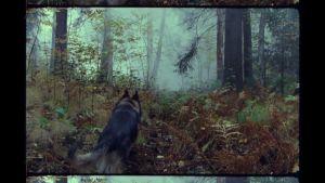 Saksanpaimenkoira juoksee syksyisessä metsässä.