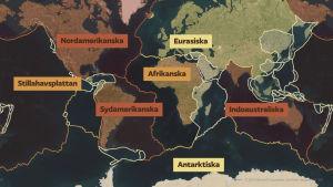 Grafik på de största kontinentalplattorna.