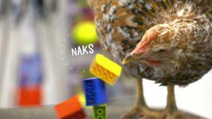 Kerttu-kana on nokkaissut legotornia. Kuvassa on naksuttimen ääntä kuvaava NAKS-teksti.