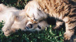 Kissa ja koira.