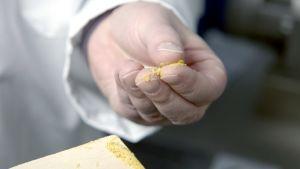 Lastalle poimittua proteiinijauhetta on otettu sormiin tunnusteltavaksi.