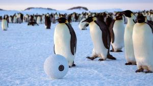 Eläimiksi naamioidut piilokamerat kuvaavat, mitä lumen ja jään valtakunnassa oikeasti tapahtuu.