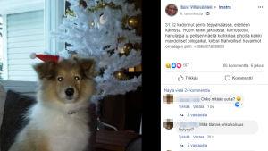 Ilmoitus kadonneesta koirasta Facebookissa.