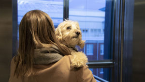Nainen kantaa koiraa sylissään.