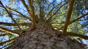 En trädstam fotad nerifrån.