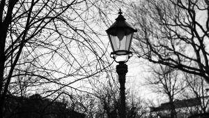 En gammaldags lamppost omringad av bara träd.