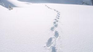 Jalanjäljet lumessa