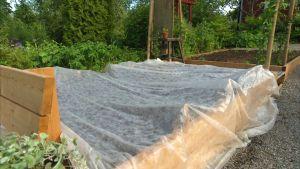 Ett morotsland täckt av en fiberduk