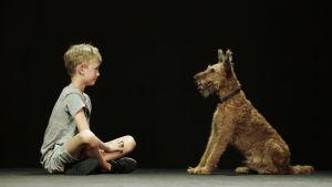 Poika ja koira istuvat vastakkain ja katsovat toisiaan.
