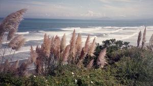merimaisema, etualalla kasveja
