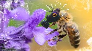 Mehiläisellä on kaasunaamari - ympärillä leijuu myrkyllistä savua