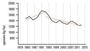 Kuvassa on käyrä, joka osoittaa rypsisatojen pienentyneen Suomessa 1990-luvulta lähtien.