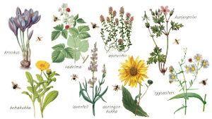 Kuvassa on piirroskuvia kukista.