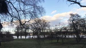 Säveltäjä Kaija Saariahon maisema Hesperian puistoon keväällä 2020.