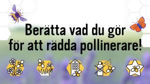 Grafikbild med vinjetter aom visar hur man kan rädda pollinerare.