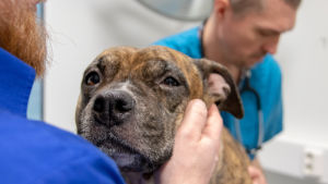 koira eläinlääkärissä
