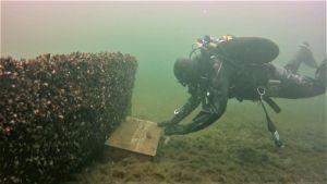 En dykare tar upp en kista från botten i Skärgårdshavets nationalpark.