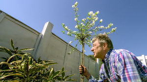 Brittipuutarhuri Alan Titchmarsh kunnostaa puutarhoja tehokkaan tiiminsä kanssa.