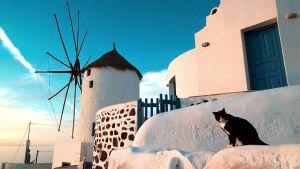 En svartvit katt i solnedgången, med Santorinis vita byggnader i bakgrunden.