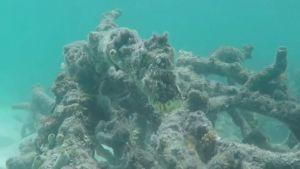 Döda koraller