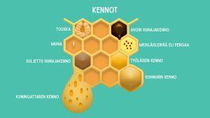 Mehiläispesän kennoston tyyppejä
