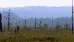 Aapasuo Patvinsuon kansallispuistossa.