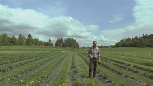 En man som står i ett jordgubbsland.