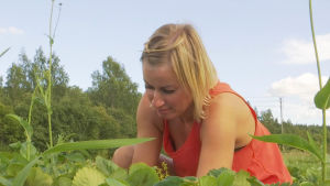 En kvinna i ett jordgubbsland.