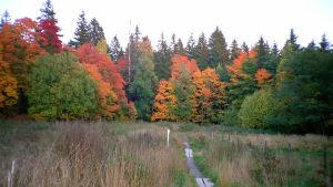 Metsän ruskaa.