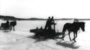 Saimaan saarelaiset ajavat hevosreellä keväisellä jäällä.