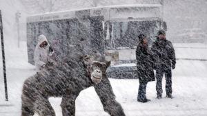 Lumisade ja apina.