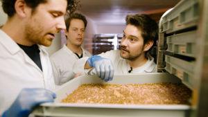 Henri Alén ja kaksi tutkijaa katsovat toukkaviljelmää tuotantolaitoksessa.