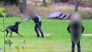 En person med blurrat ansikte slår en hund vid ett skolningstillfälle på en gräsmatta.